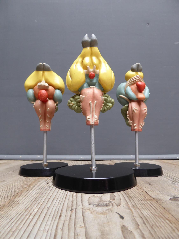 Anatomical Brain Models