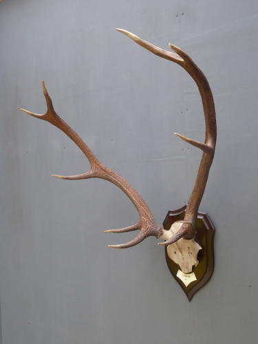 Scottish Deer Antlers By Rowland Ward