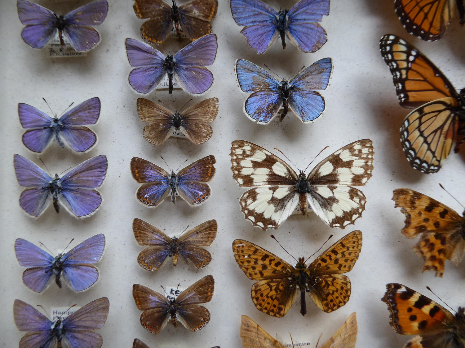 Cased Entomology Collection Of Butterflies & Moths