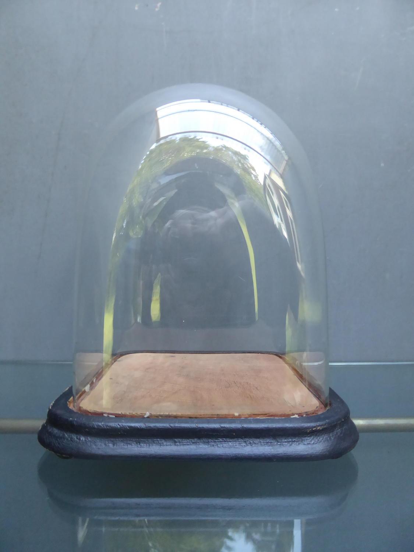 Square Victorian Glass Display Dome