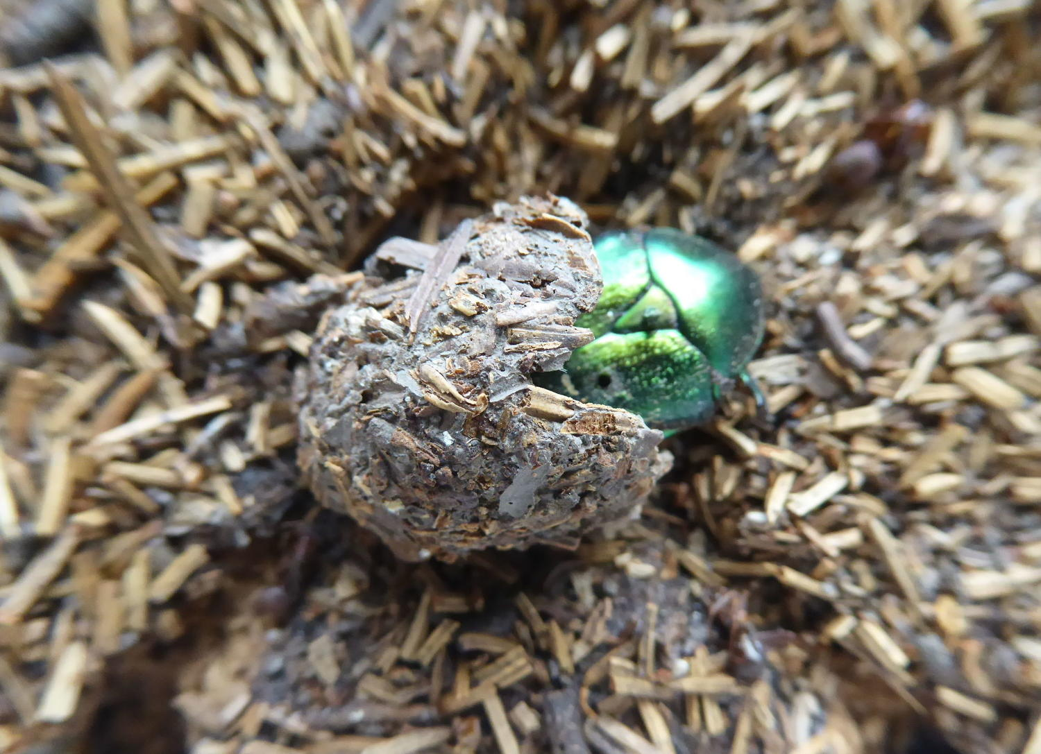 Natural History Study ~ Wood Ant Nest