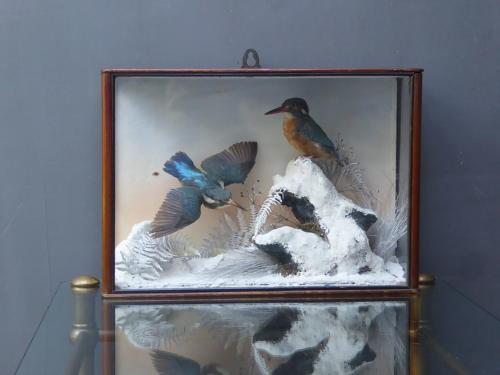 Kingfishers In Winter