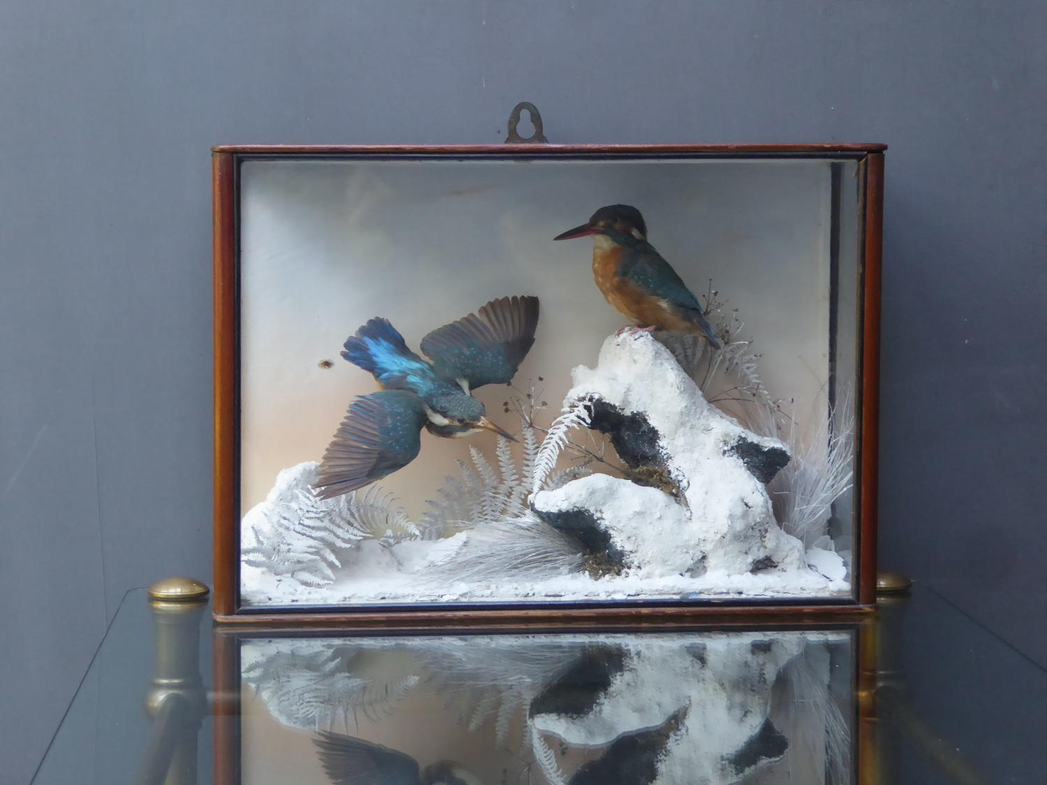 Kingfishers In Winter