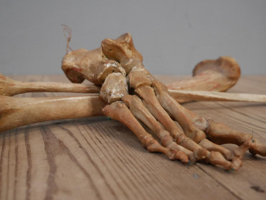 Articulated Human Foot