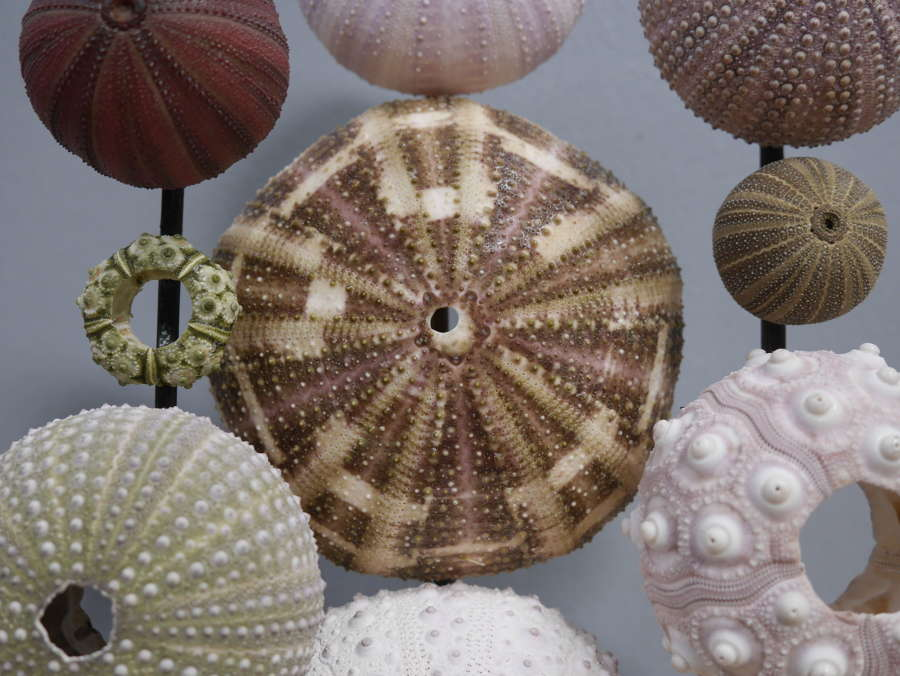 Natural History Display Dome ~ Urchins