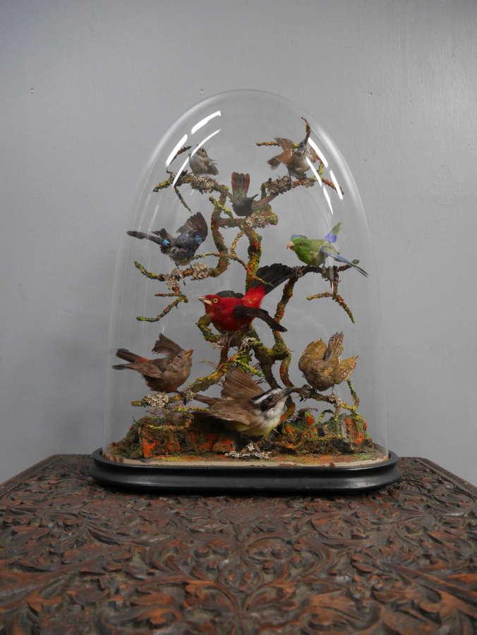 Natural History Display Dome ~ Birds